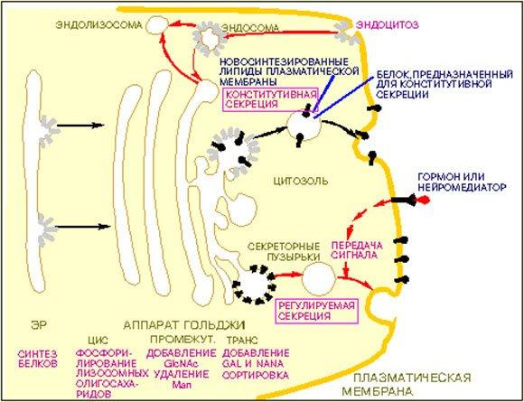 Везикулярный дерматит