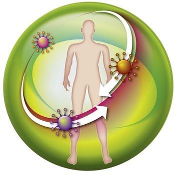 имуная система