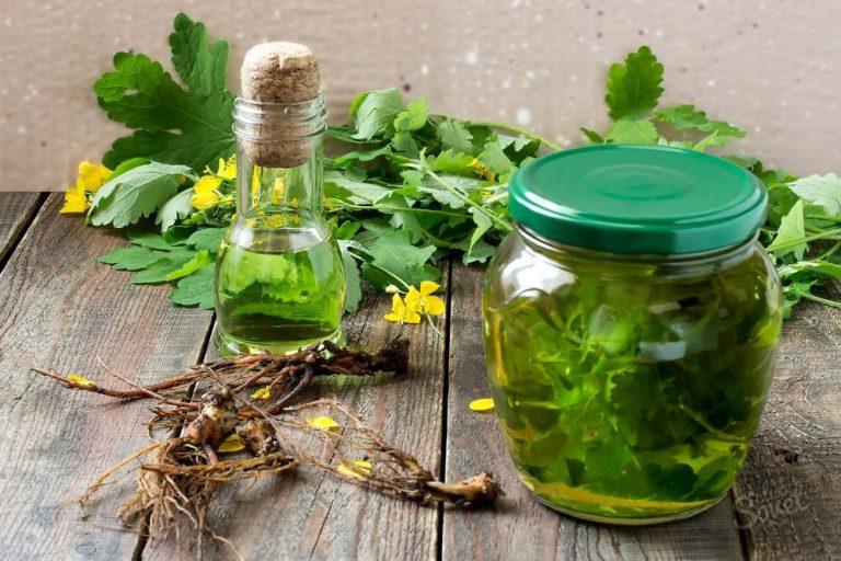 диване настой травы как делать лекарственный мацает сиськи